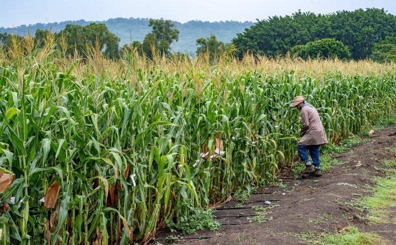 Field worker.jpg