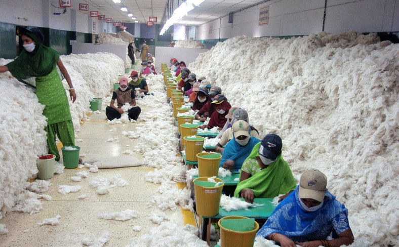 cotton_before_processing_at_an_Indian_spinning_mill_wikimedia.jpg