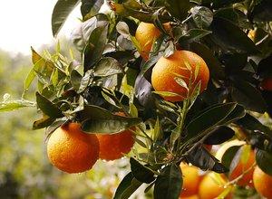 orange farm.jpeg