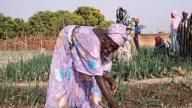 Guinea_Dinguiraye_farmers_cooperative_credit_USAID