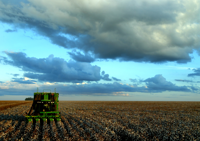 "John Deere cotton harvester (""cotton picker"") in Brazil-credit-João Felipe C.S"