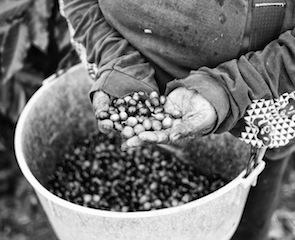 coffee beans Christopher Michel, via Wikimedia Commons