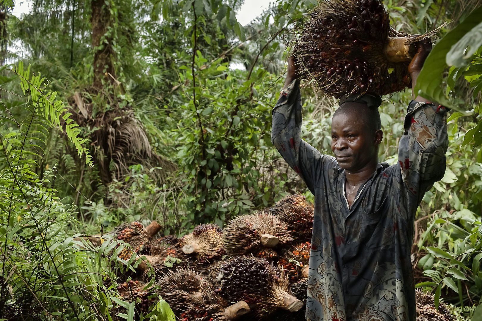 Картинки по запросу palm oil environmental impacts