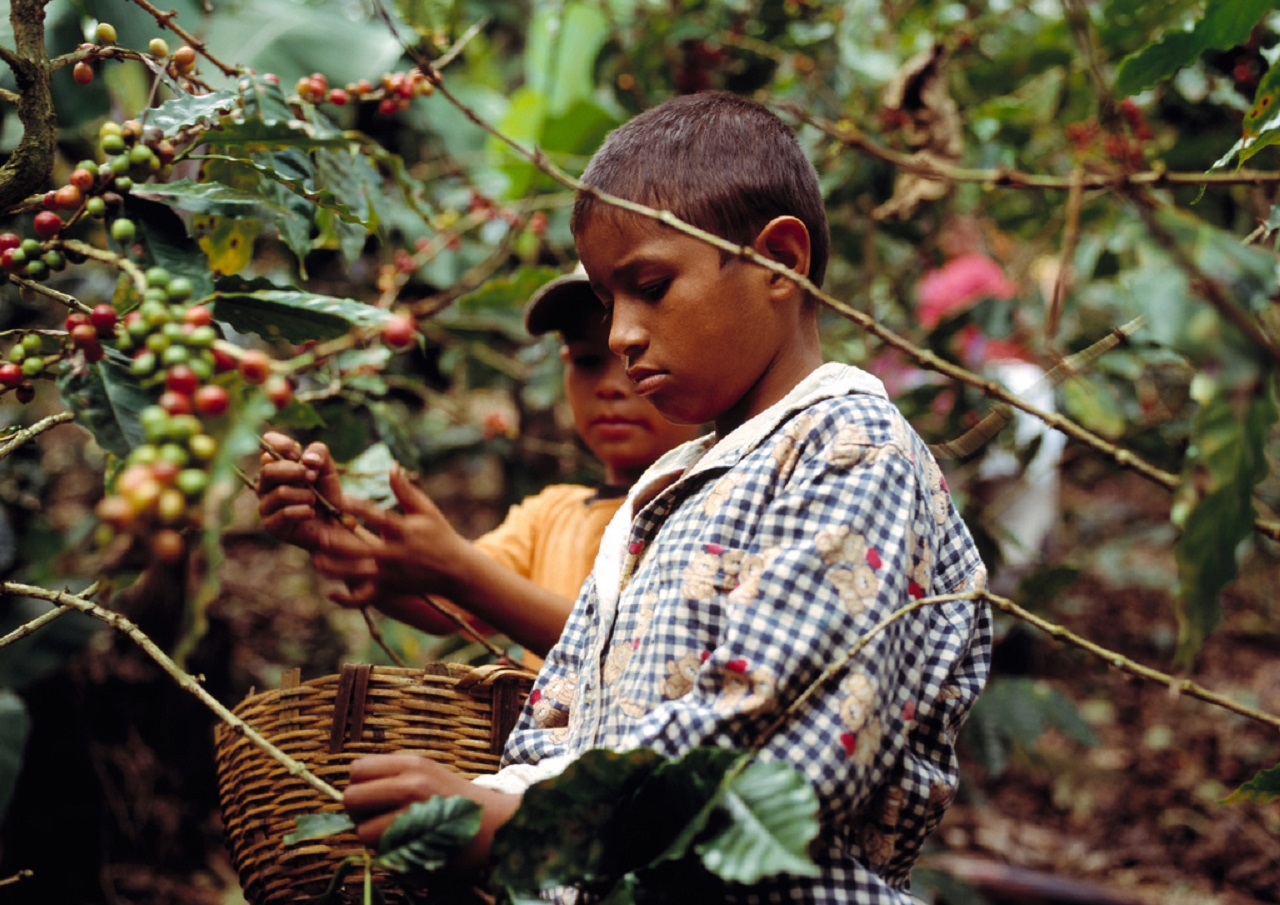 child_labour_cofee_credit_flickr_Trocaire