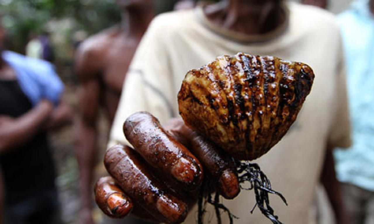 A man holds a shell coated in oil in Ogoniland in Nigeria delta region Credit Akintunde Akinleye/Reuters