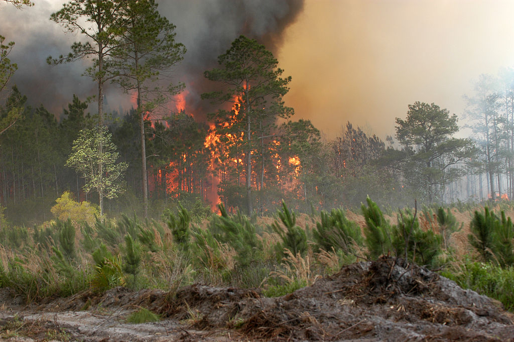 Bugaboo_forest_fire_US_Credit_FEMA