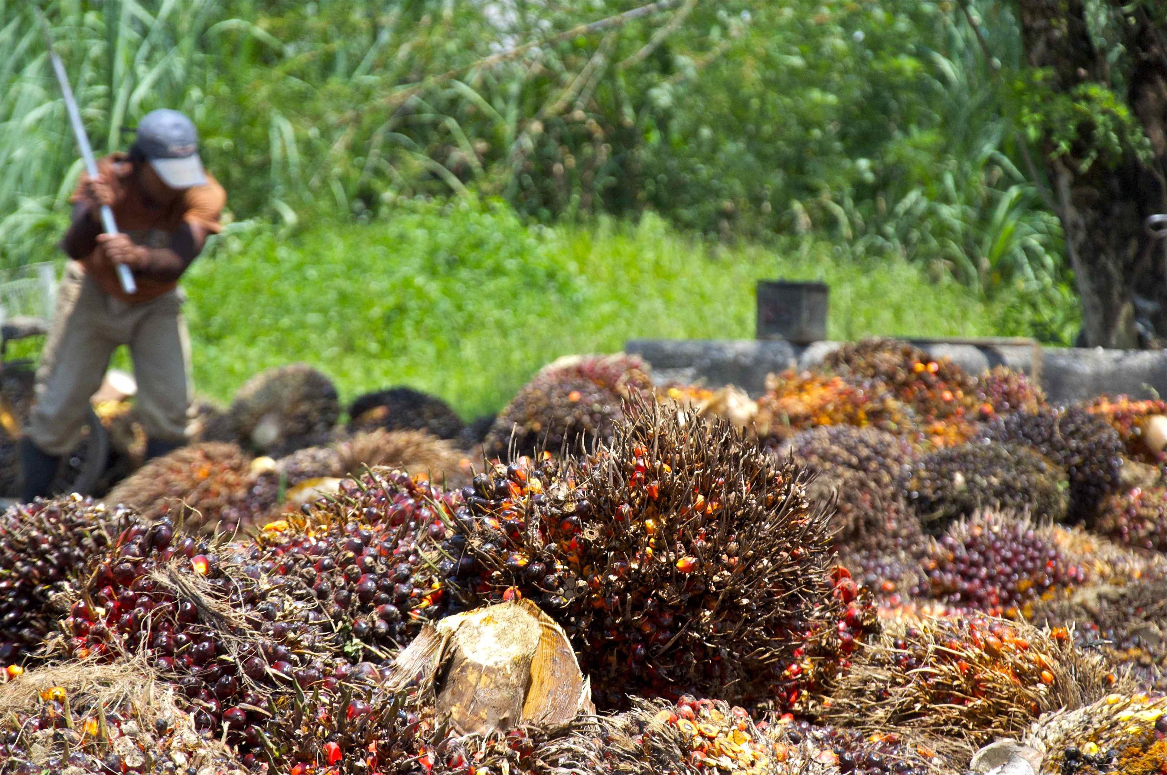 Guatemala: Cargill & Repsa acknowledge need to prevent