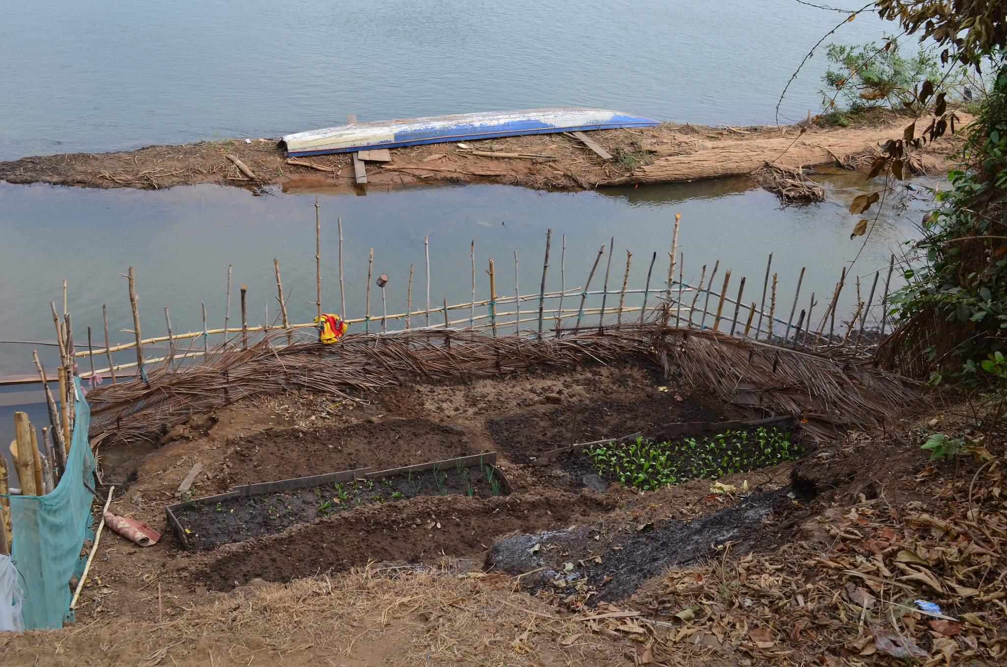 Riverbank-gardening-on-site-of-Lower-Sesan2-Dam-photo-by-Intl-Rivers