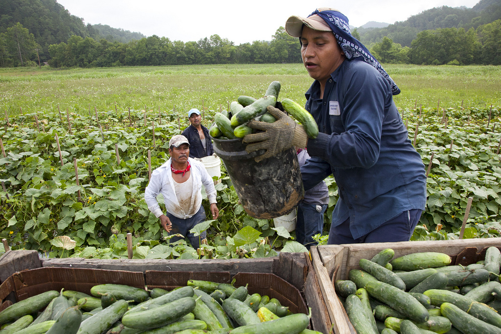 migrant-workers-virginia-credit-laura-elizabeth-pohl-bread-for-the-world